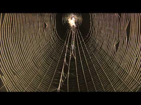 Spider catching prey