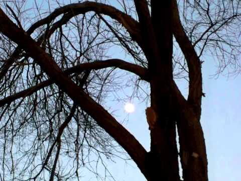 Autumn Moon.mov